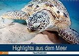 Highlights aus dem Meer - Tauchkalender (Wandkalender 2019 DIN A2 quer): Erleben Sie die farbenfrohe fantastische Welt unter Wasser! (Monatskalender, 14 Seiten ) (CALVENDO Tiere)
