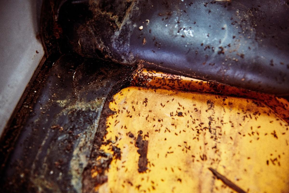 Ameisen unter dem Bodenbelag eines zu restaurierenden Fahrzeugs