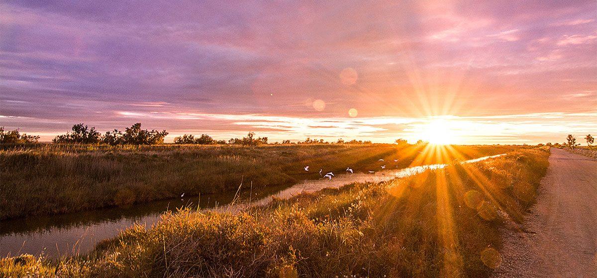 Sonnenaufgang Camargue