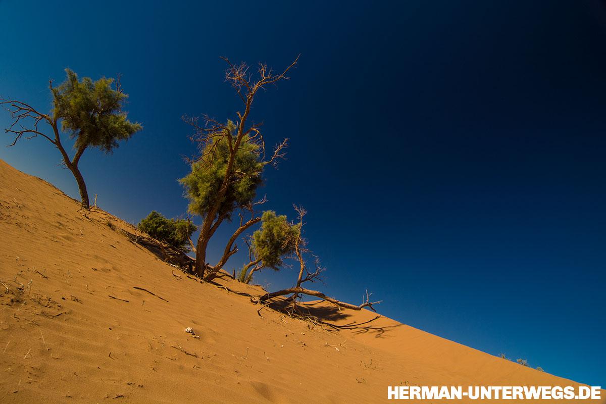 Eine Sanddüne im Erg Chegaga, in der einzelne Baumstämme mit grünen Kronen stehen