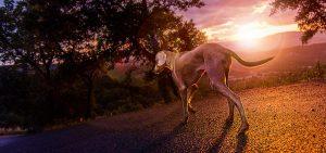 Hund in Gassin