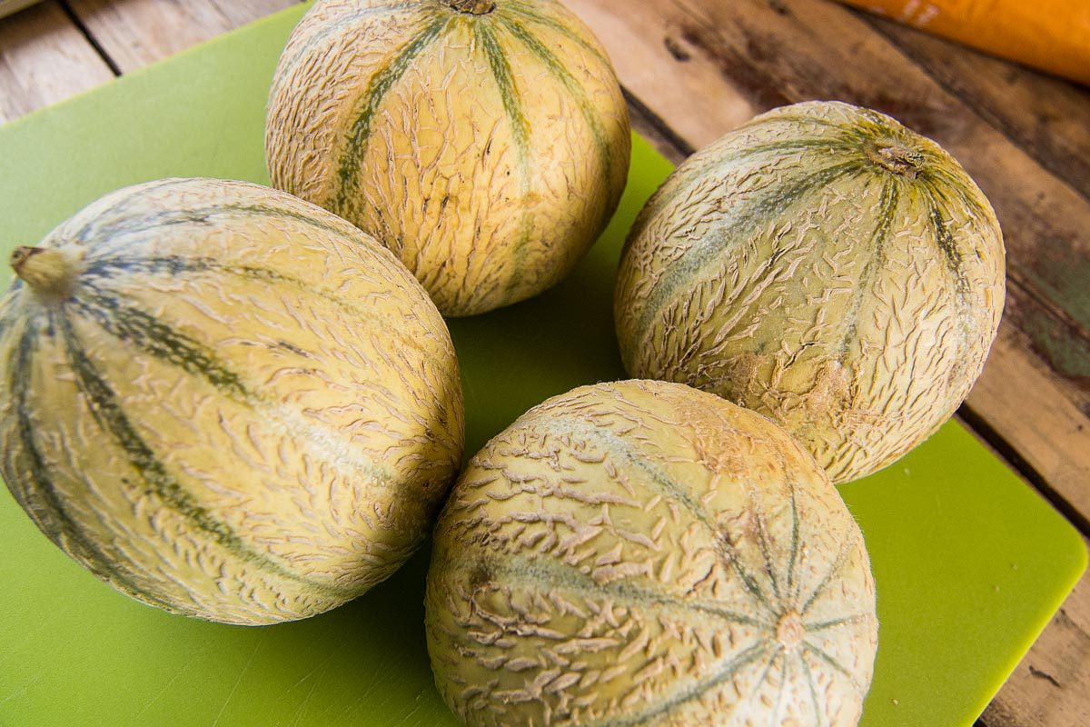 Melonen gratis