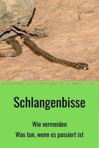Schlangenbisse - Vorbeuten und Erste Hilfe