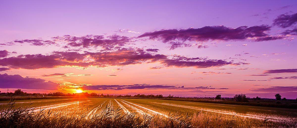 Ein Reisfeld im letzten Sonnenlicht