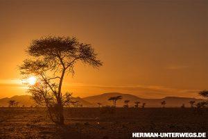 Akazienbäume im goldenen Sonnenuntergang bei Foum Zguid