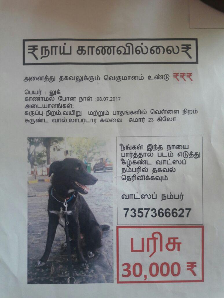 Hund entführt in Indien. Mit Tausenden Flyern auf der Suche nach Luke.