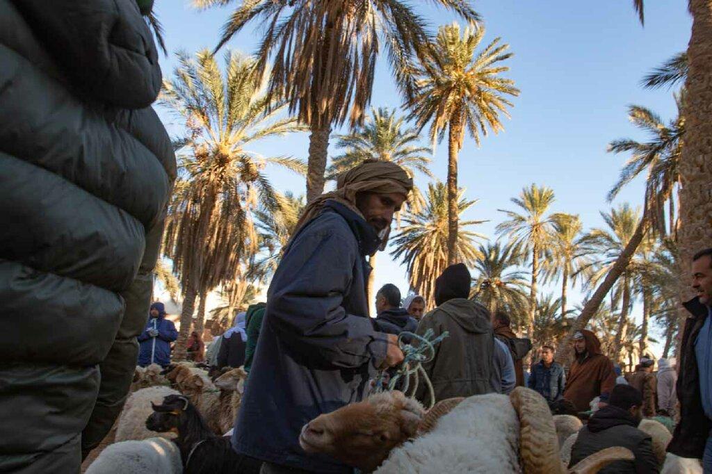 Tiermarkt Douz, Tunesien