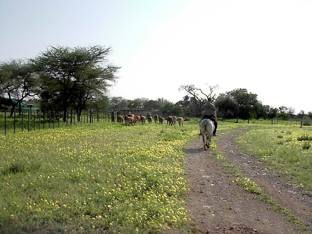 Torsten beim Kühe hüten zu Pferd in Afrika - mobiles Leben als Pferdetrainer