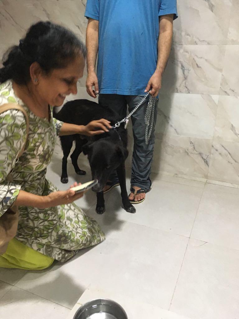 Mikrochip scannen beim Tierarzt in Indien