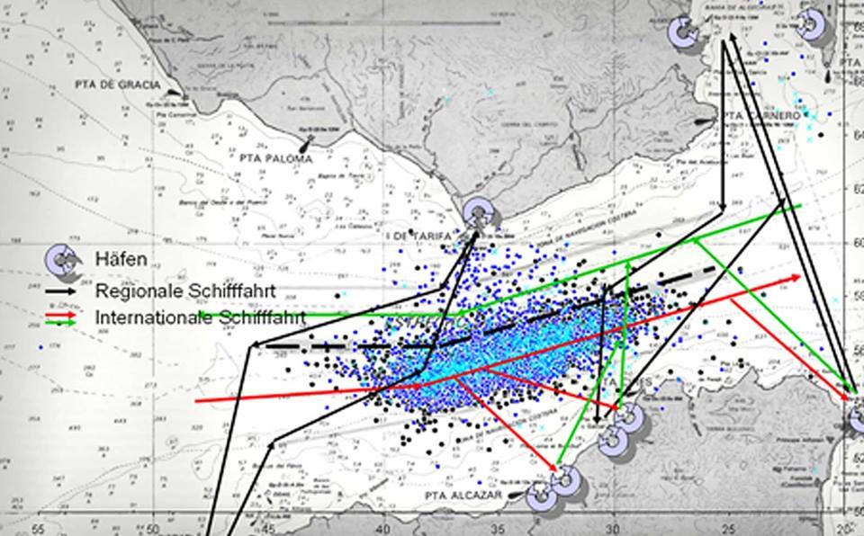Karte Gibraltar Umgebung.Whalewatching Tarifa Mit Firmm Den Meeressäugern Helfen